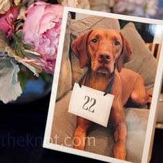 Photo Table Numbers // photo by: Angela Renée Photography