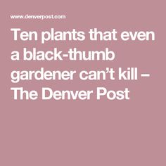 Ten plants that even a black-thumb gardener can't kill – The Denver Post