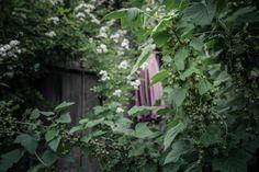 © bysahlia.com Gmunden Austria, Garden, Plants, Home, Graphics, Garten, Lawn And Garden, Ad Home, Gardens