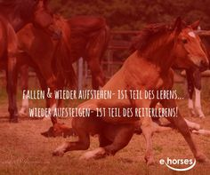 #ehorses_official http://blog.ehorses.de/
