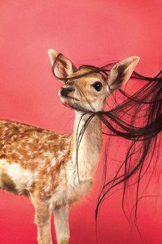 Revista Picnic - Animals - Ryan McGingley