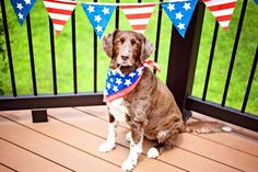 Celebrationg Independance Day with your dog? Learn how to keep your dog safe on the Fourth of July.