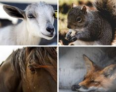 Animal Hair is a common non vegan beauty product ingredient to watch out for! If you want to find out some more of the most common non vegan ingredients in your beauty products. Then click the link below! Cosmetics Industry, In Cosmetics, Vegan Beauty, Veganism, Beauty Products, How To Find Out, Watch, Link, Hair