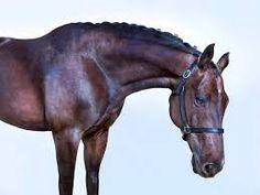 Bildergebnis für Horse in studio