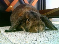 Mr Buttons Tips & Tricks To Preventing #Bunny Boredom - https://getbunnybox.com/how-to-prevent-your-bunny-becoming-bored/ #BunnyBox #Bunnies #Cute #Tips