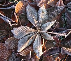 Christmas greetings to all my Pinterest friends! May the New Year embrace us kindly!! <3 Åse Margrethe Hansen Color Photography, Christmas Greetings, Color Inspiration, Plant Leaves, Surface, Shades, Autumn, Texture, Friends
