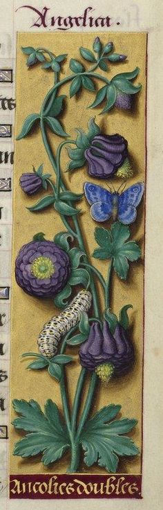 """From """"Les Grandes Heures d'Anne de Bretagne"""" a book of hours, commissioned by Anne of Brittany, Queen of France and illuminated by Jean Bourdichon between 1503 and Art Floral, Vintage Floral, Illustration Botanique, Antique Illustration, Medieval Manuscript, Medieval Art, Illuminated Letters, Illuminated Manuscript, Botanical Flowers"""