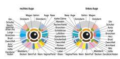 Das Auge – mehr als der Sitz der Seele: Dies sagt deine Iris über DICH aus!