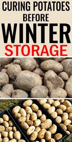 Potato Gardening, Planting Potatoes, Vegetable Gardening, Canning Vegetables, Growing Vegetables, Veggies, Growing Flowers, Planting Flowers, Fall Planting