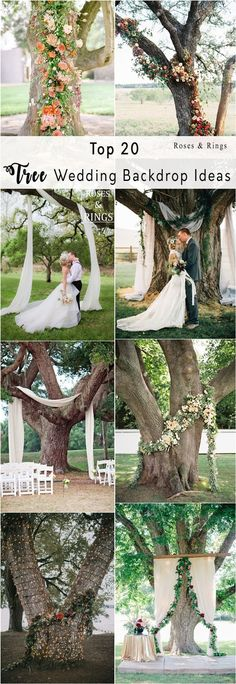 Wedding Tree Ceremony Arches and Backdrops#weddings #weddingideas #weddingarces #weddingdecor