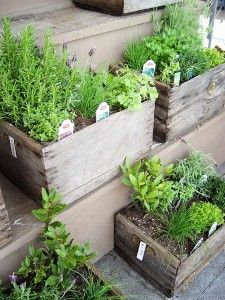 small container garden of herbs and vegetables..