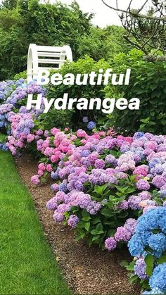 Hydrangea Landscaping, Hydrangea Garden, Hydrangea Flower, Front Yard Landscaping, Hydrangeas, Simple Landscaping Ideas, Minnesota Landscaping, Home Landscaping, Garden Care