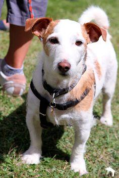 Elveden Estate Dog Day for Alzheimers Society