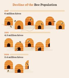 Beyond The Bees' Knees: The Affects of Colony Collapse #bees