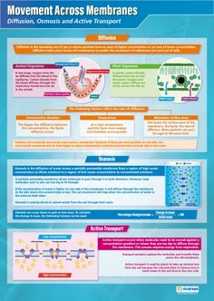 Movement Across Membranes Poster