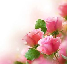 Cute Pink Roses Background