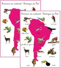 Résultats de recherche d'images pour «animaux par continent»