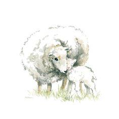 Sheep And Lamb Art Print by Carol Robinson Lamb Drawing, Sheep Drawing, Animal Paintings, Animal Drawings, Watercolor Animals, Watercolor Paintings, Canvas Art, Canvas Prints, Art Prints