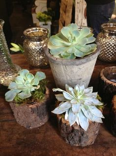 Succulents in concrete and wood containers