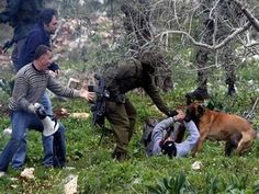 "On a 2013 visit, possible Def Sec'y nominee Ashton Carter lauded the Israel-US bond and called Israeli army dogs ""the fun part"" of military life. Israel used dogs to quell Palestinian stone-thrower..."