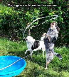 Water park for the dogs