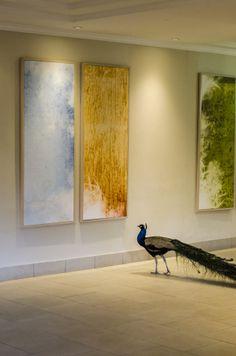 Peacock Art Admirer