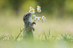 """""""Wiosna, wiosna, wiosna, ach to ty"""" chciałoby się zaśpiewać na widok pięknych, słonecznych i coraz bardziej kolorowych dni. Świat budzi się do życia, a wraz z nim budzimy się my i budzą zwierzęta. Zobaczcie jak niektóre ze stworzeń cieszą się"""