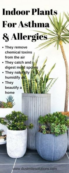 best indoor plants for asthma allergies and air pollutions best indoor plants for asthma alle. best indoor plants for asthma allergies and air pollutions best indoor plants for asthma allergies and air pollutions, Inside Plants, Cool Plants, Inside Garden, Small Plants, Best Air Purifying Plants, Air Purify Plants, Air Filtering Plants, Air Plants Care, Plantas Indoor