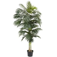 Beachcrest Home Brookings Cane Palm Tree in Pot