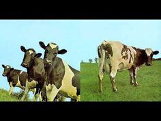 ▶ Pink Floyd - Atom Heart Mother - YouTube
