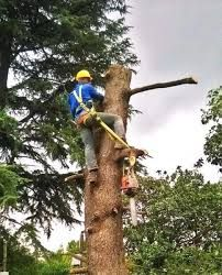 SW Tree Felling is a reputable Treefelling company in Pretoria with over 8 years experience in Tree felling, Palm tree pruning and Garden maintenance in Pretoria and other surrounding areas. Call on: 073 767 3430 or email at: quotes@sw-treefelling.co.za