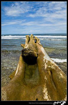 Playa puerto-viejo  Limon, Costa Rica