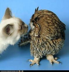 Daily Squee: Interspecies Love: Who are You? - Lolcats 'n' Funny Pictures of Cats - I Can Has Cheezburger?