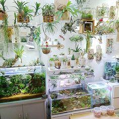 Indoor Water Garden, Indoor Plants, My New Room, My Room, Paludarium, Vivarium, Aquariums, Aquarium Design, Home Aquarium