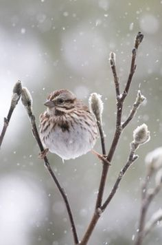 Are not two sparrows sold for a penny? Yet not one of them will fall to the ground outside your Father's care...So don't be afraid; you are worth more than many sparrows.~Matthew 10  Credit- Michele Black, Ohio