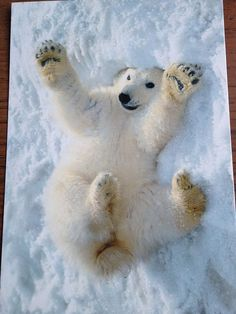 Polar bear in Svalbard, Norway Fluffy Animals, Baby Animals, Cute Animals, Animals And Pets, Baby Giraffes, Wild Animals, Polar Bears International, Svalbard Norway, Baby Otters