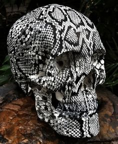 cee7a00b0c2 Skull With Black   White Snake Skin......AWESOME!!!