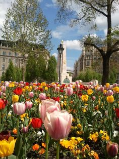 Tulips on the Liberty Square in Budapest.