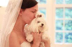 Ideias para casamento e festa: Cachorro como convidado especial do casamento