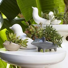 These Ceramic Animal Planters are designed to hold small succulents and kitchen herbs. If you're not a plant person, they're just as suited to holding soap in the bathroom or collecting coins on a console. Garden Spaces, Garden Pots, Ceramic Planters, Planter Pots, Sculptures Céramiques, Kitchen Herbs, Ceramic Animals, Hanging Planters, Head Planters