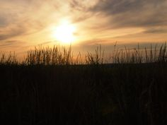 Sonnenuntergangsstimmung auf Gut Suckow. Getreidefeld beim Sonnenuntergang. Hideaway Berlin.