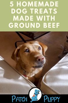 Looking for a ground beef dog treats recipe? Give these 5 Homemade dog treats made with ground beef a try. Diy Dog Treats, Homemade Dog Treats, Dog Treat Recipes, Dog Food Recipes, Homemade Recipe, Healthy Recipes, Dog Jerky Recipe, Dog Treat Pouch, Dog Spay