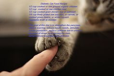 Diabetic cat food recipe chefs pampered pet recipes pinterest diabetic cat food recipe forumfinder Images