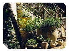Pflanzen Klebefolie