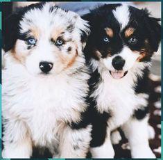 25 MONEY K Collectible ITEM Poodle Dog Million Dollar Bills Novelty FAKE