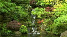 Meditation Music, Herbs, Herb, Medicinal Plants