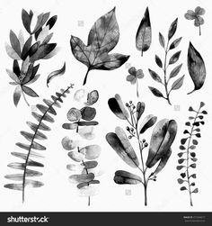Set Of A Watercolor Leaves And Branches. Hand Drawn Natural Elements For Your Design. Raster Illustration Or Logo. - 471694517 : Shutterstock