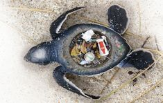 <p>WWF launched a new ad campaign featuring marine animals who have been harmed by our trash. </p>