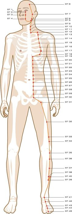 Acupuncture Points On Your Legs & Feet What acupuncture points are located on your legs and feet? On this page I'll show you all of the acupuncture meridian points from our free online acupuncture points guide that are located along your legs and Meridian Acupuncture, Point Acupuncture, Acupuncture Benefits, Acupuncture Points Chart, Acupressure Treatment, Acupressure Points, Acupressure Therapy, Meridian Points, Shiatsu