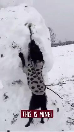 Cute Baby Dogs, Cute Funny Dogs, Cute Funny Animals, Silly Dogs, Cute Puppies, Cute Animal Videos, Cute Animal Pictures, Funny Animal Jokes, Funny Dog Videos